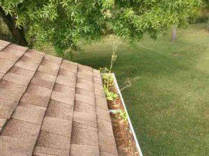 gutter with plants growing inside