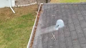 gutter cleaning tarpon springs